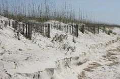 myrtle beach south carolina images | Myrtle Beach Photo: The Dunes at Myrtle Beach State Park