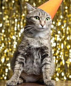 Cat Birthday Long Life Tips