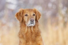 beautiful girl <3  Copyright: SITZ UND BLITZ Hundefotografie