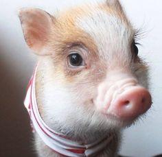 Divine baby pig!
