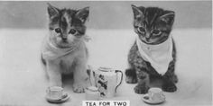 Old-Timey Cats