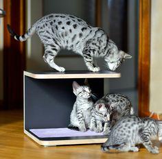 Katzenmöbel von stylecats