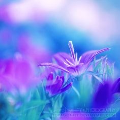 purple and blue Dark Blue Green, Purple Teal, Purple Sunset, Colour Pallette, Color Combos, Lavender Blue, Turquoise, Flower Wallpaper, Macro Photography