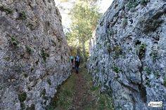 Ruta de Las Catedrales de Uña: Recorrido, fotos y track. Madrid, History, Plants, Places To Travel, Hiking Trails, Travel, Historia, Plant, History Activities