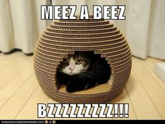 MEEZ A BEEZ BZZZZZZZZZ!!! - when we finally clear out some of the shipping boxes, I'm so making this.