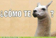 No hablo Español?  Lo siento....