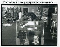Museo LLico