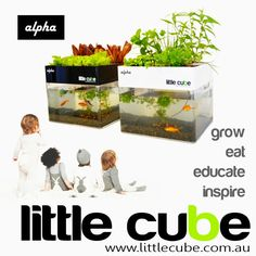 Little Cube Alpha - In Home aquaponics. gardening, cooking, herbs kitchen hydrop