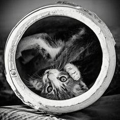 la vie des chats en noir et blanc 13   32 superbes photos de chats en noir et blanc   photo noir et blanc image felin classe chat