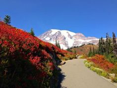 Camp Muir @ Mt. Rainier -byharris
