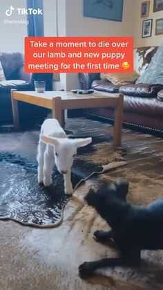 Cute Little Animals, Cute Funny Animals, Funny Cute, Cute Puppies, Cute Dogs, Cute Babies, Animal Jokes, Funny Animal Memes, Cute Animal Videos