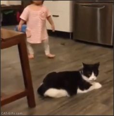 CAT GIF • Cat knocking over running kid! I said you shall not pass, OK?