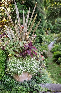 Bigger is better when selecting a pot—not just for creating pleasing scale but also to give plants plenty of room to stretch their roots and grow. As a general rule, the pot should be about one-third to one-half the height of the planting at maturity. Here, spiky New Zealand flax combines dramatically with fuchsia, coleus, and sweet alyssum.