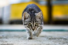I'll catch ya by bettina puddu on 500px