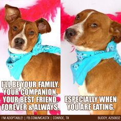 Through good times, and bad times, and (especially) meal times! ;) #mcaspets #funnydogs #adoptme