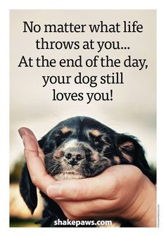 Your dog always love you!