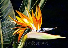 Art of Mary Gibbs Bird of Paradise Watercolor Projects, Watercolor Sketch, Watercolor Illustration, Watercolor Flowers, Watercolor Paintings, Watercolor Ideas, Watercolours, Mary Gibbs, D Flowers