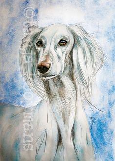 White Saluki / Sighthound / witte Saluki petportrait dogpainting hondenschilderij dog art by Tanja Kooymans