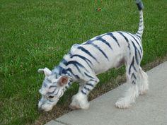 Halloween Photo Contest Entry: Mako The Zebra - PupLife Designer Dog Supplies