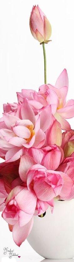 Frivolous Fabulous - Gorgeous Pink Orchids Frivolous Fabulous Arrangement De Fleurs