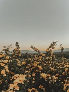 These views flower aesthetic, yellow flower wallpaper, aesthetic lockscreens, aesthetic backgrounds, aesthetic Tumblr Wallpaper, Screen Wallpaper, Nature Wallpaper, Wallpaper Backgrounds, Wallpaper Patterns, Iphone Wallpapers, Wallpaper Quotes, Painting Wallpaper, Painting Canvas