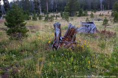 The Summer-Dry Meadow - Photobotanic