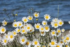 Flowers, Water, Summer, Nature, Plant