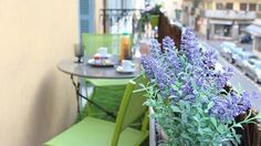 Les Citadelles 1 - Holiday Apartment in Cannes Holiday Apartments, Vacation Apartments, Cannes France, 1 Bedroom Apartment, Plants, Planters, Plant, Planting