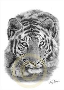 Big Cat SUMATRAN TIGER Artwork Print Pencil Drawing A4 signed by artist