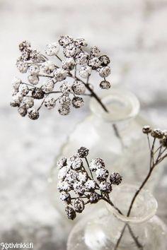 Talventörröttäjä kotiin – 5 kaunista ideaa!   Kotivinkki Planting Flowers, Anna, Plants, Home, Ad Home, Plant, Homes, Haus, Planets