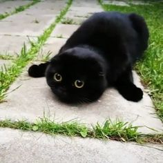 Say NO to catnip! http://ift.tt/2ryFtW5