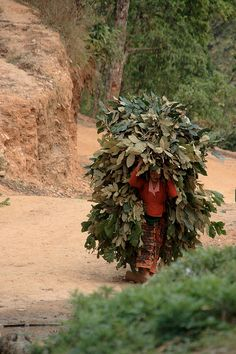 Woman farmer, Bandipur.