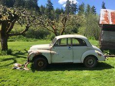 Bill's 1960 Morris Minor 1000 Saloon (2-door) (For Sale $600) AutoShrine Registry