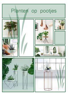 collage trendboek. planten op pootjes