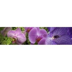 Details of violet orchid flowers Canvas Art - Panoramic Images (40 x 10)