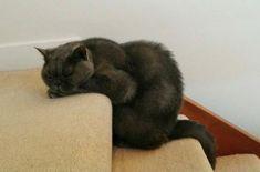 Беспринципные коты и кошки, которые могут заснуть где угодно и в абсолютно любой позе