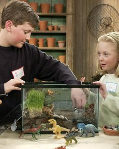 A paludarium is a cross between an aquarium and a terrarium, encasing a miniaturized world of unusual landscapes and plants in a tropical environment. Children often find that paludariums offer the ideal terrain to place such toys as plastic dinosaurs and alligators.