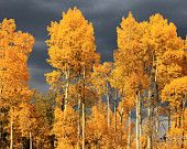 """25% off all Blonde Dutch Girl photos now until September 30th using AUTUMN2014 at checkout!  Aspen Trees and Grey Storm Clouds (16"""" x 24"""" photograph)"""