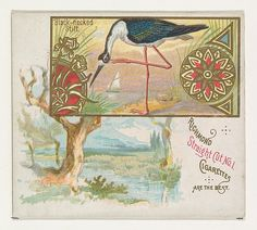 Black-necked Stilt, from the Game Birds series (N40) for Allen & Ginter Cigarettes