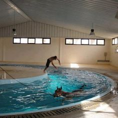 Swimming horses. The perfect exercise for horses in hot and humid climates
