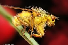 Gold fly by Ondrej Pakan on 500px