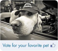 Kimpton Hotels pet photo contest.  Hoping we win so I can take #Frisco @lranklinlab to visit a Kimpton! #VoteForFranklin