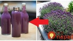 Lavender Recipes, Russian Recipes, Diy Birthday, Healthy Drinks, Aloe Vera, Herbalism, Drinking, Fiber, Beverages