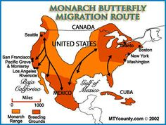 Monarch Butterfly Migration Threatened | Connect-Green