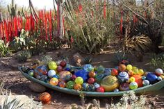 The Amazing Art of Dale Chihuly in the Desert Botanical Garden in Phoenix -- blown glass, people! Dale Chihuly, Desert Botanical Garden, Botanical Gardens, Glass Garden Art, Glass Art, Desert Plants, Rare Plants, Plant Species, Yard Art