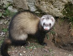 I got Ferret! Which Pet Should You Actually Have?