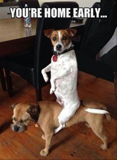 Funny Animal Pictures Of The Day - 23 Pics   Funny Animals   Daily LOL Pics