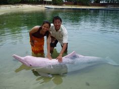 PINK DOLPHINS ARE A THING?!?! HOW DID I NOT KNOW ABOUT SOMETHING THIS AMAZING!!!!!!!!!!!!!