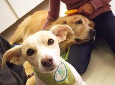 A cada 15 dias, um grupo de cachorros faz uma visita à ala pediátrica de um hospital em São Paulo