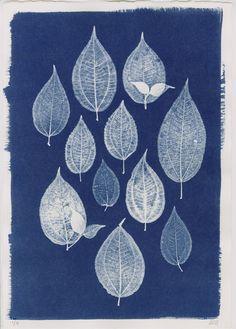 Sri Lankan Group of Leaves Cyanotype by Henrietta Molinaro at Wilson Stephens Cyanotype Process, Sun Prints, Alternative Photography, Origami, Expo, Silk Painting, Botanical Prints, Textile Art, Printmaking